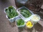 Foraged Edibles June 2012